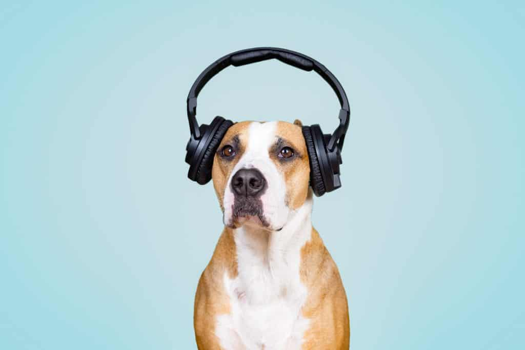noises that annoy dogs