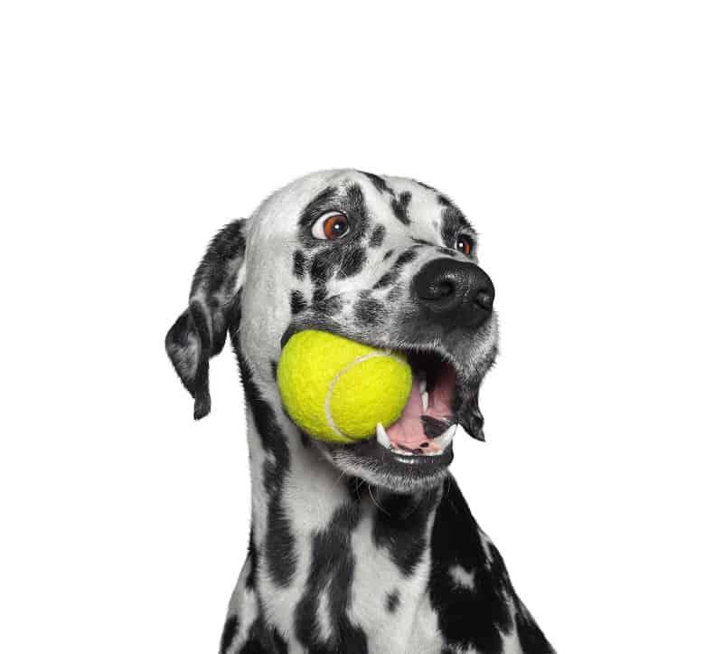 attractive dog toy sound