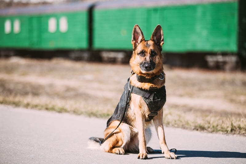 best tactical dog harnesses
