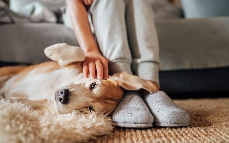 dog cuddles at master's feet