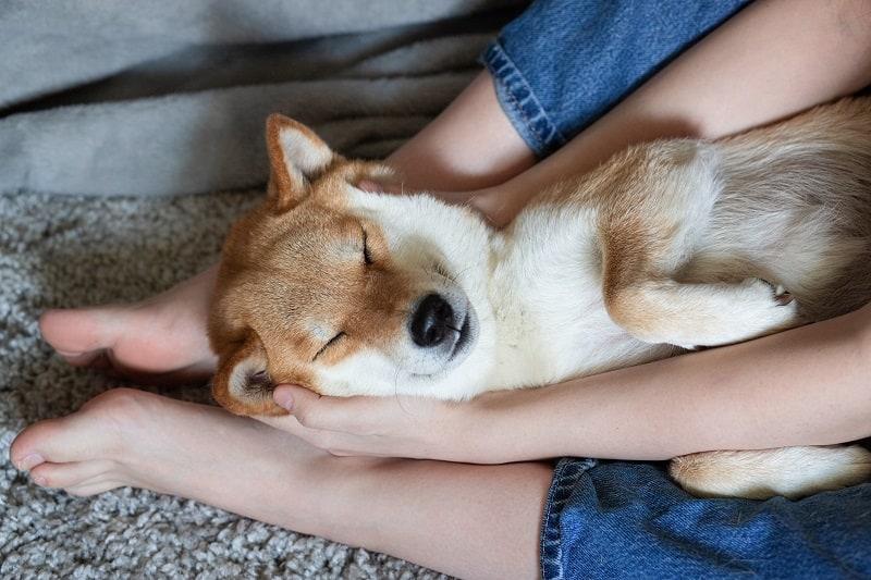 dog makes himself comfortable