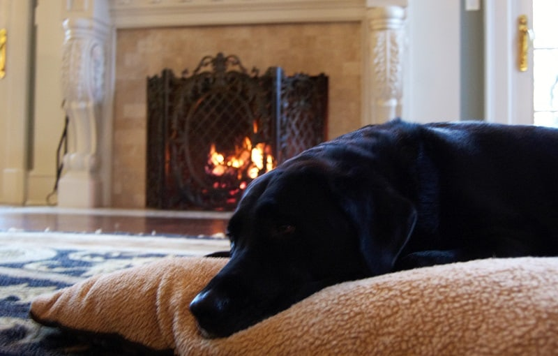 dog near fireplace