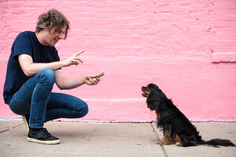 dog owner teaching commands
