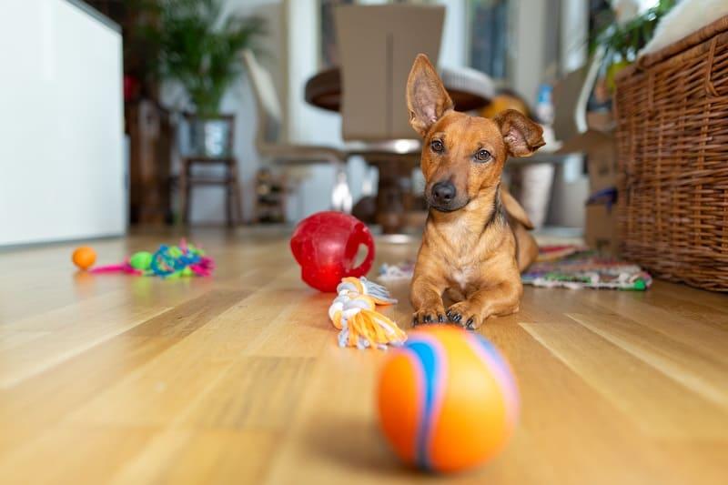 dog toys making nice sounds