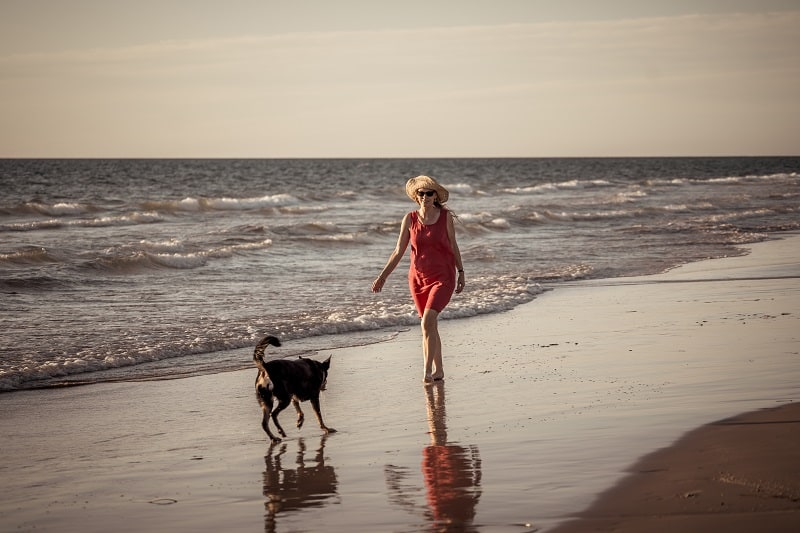 dog walking with owner at the beach
