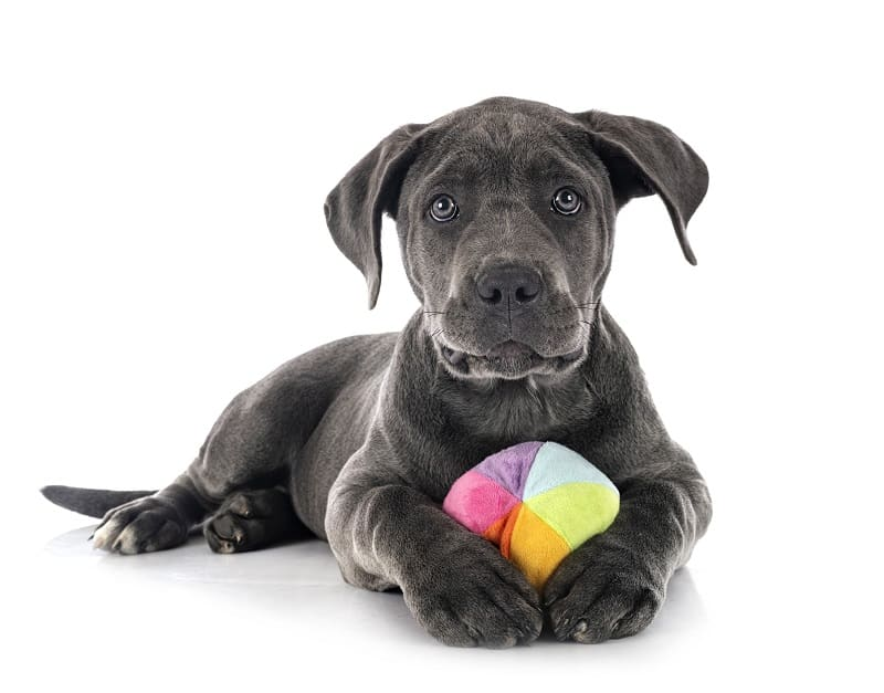 dog with his ball
