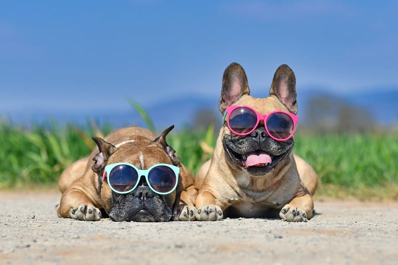 funny dogs on the beach
