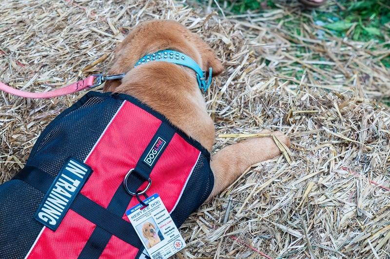 gear for dog training