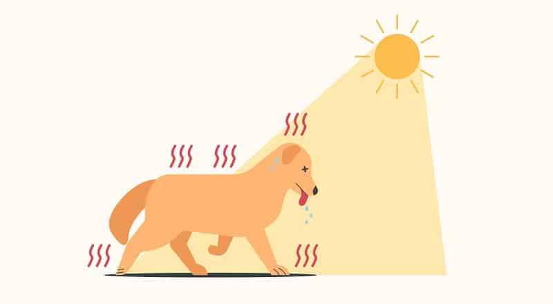weather is too hot for your dog