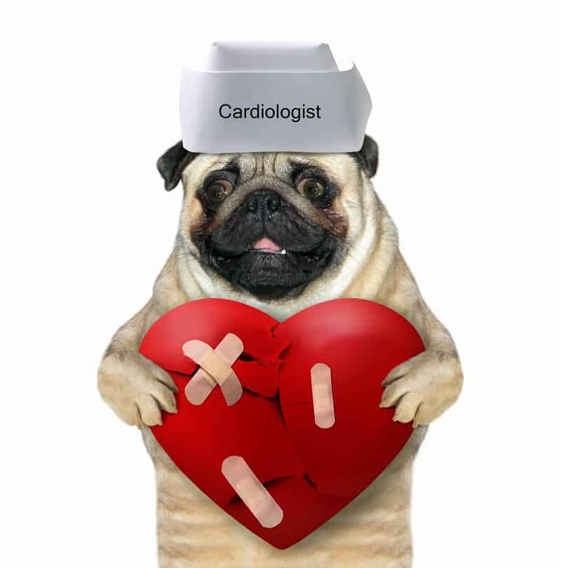 Pericardial Effusion in dogs