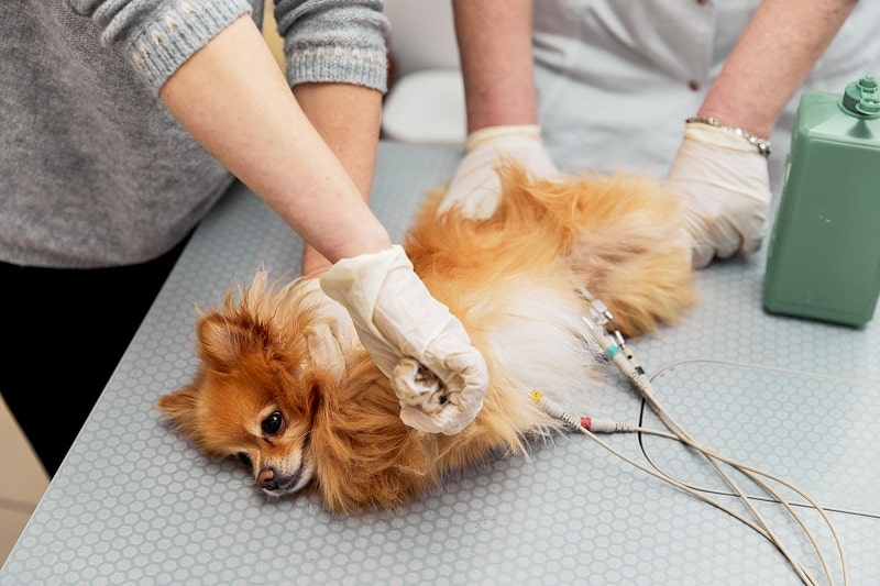 Physical Exam of a dog at the vet
