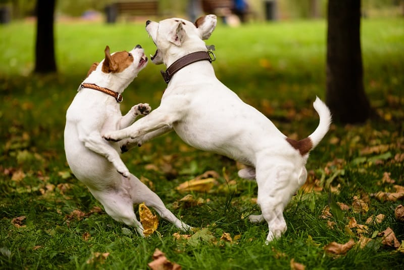 dogs engaged in a nasty fight