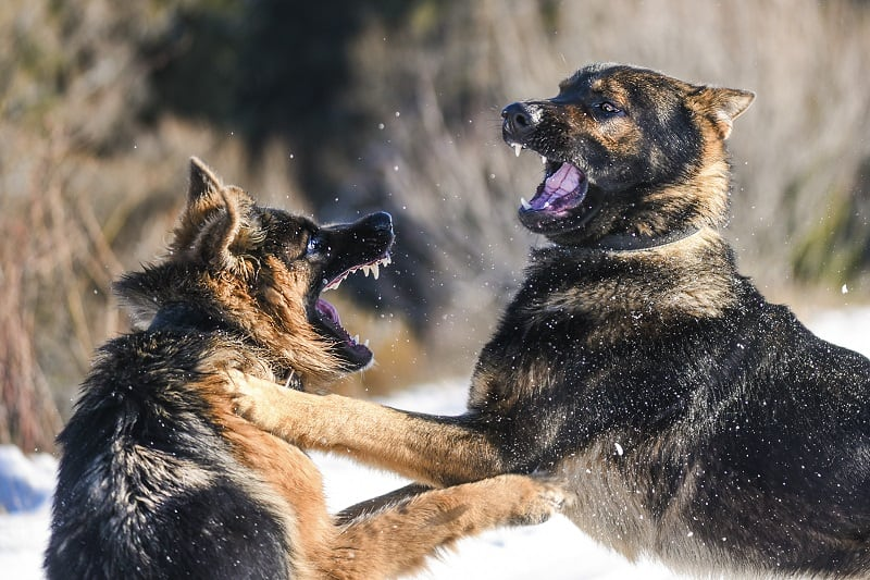 why do dogs attack other dogs